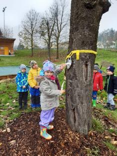 Zamykání stromů